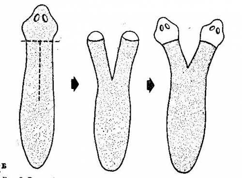 http://bioregeneration.ucoz.ru/_ph/1/2/330511378.jpg