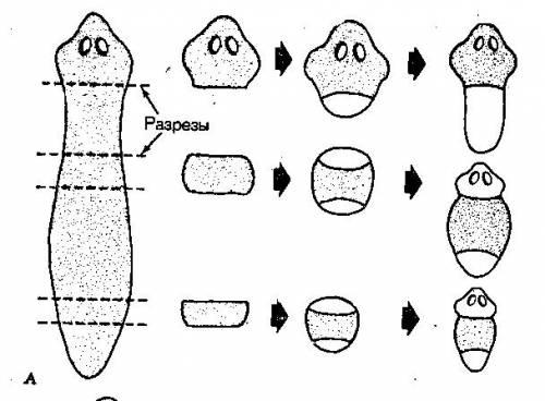 http://bioregeneration.ucoz.ru/_ph/1/2/635951909.jpg